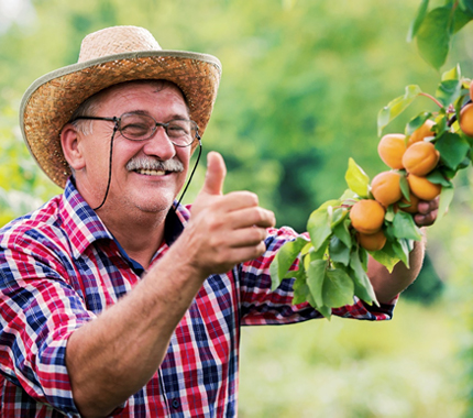 person picking fruit from a tree and smiling